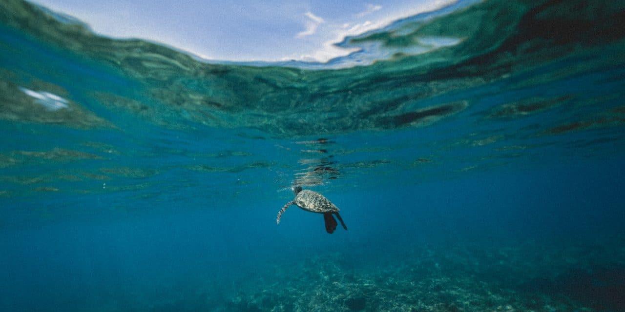 Vêtements de sport et pollution microplastique des océans : Quel impact ?